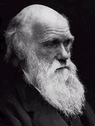 Darwinbild