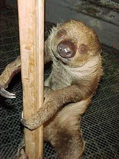 Things that make you say EWWWW Sloth-tm