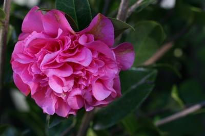 Flower-J