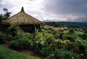 Photo Lg Papuanewguinea