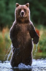 Standing Bear2 Small