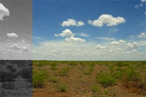 07 04 06 B Flat Landscape