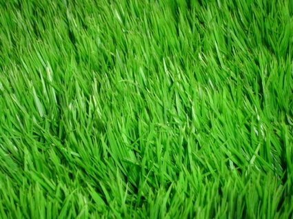 Grass By Conformity