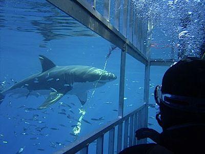 1.shark-cage.jpg