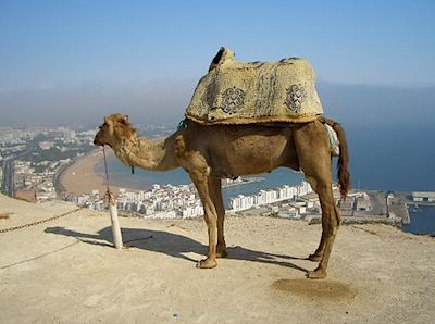 camel-on-the-kasbar.jpg