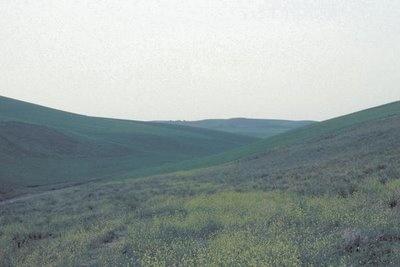 Cynoscephalae Hills