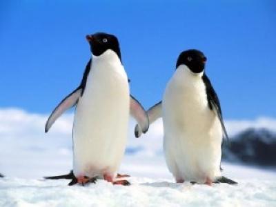 Penguinpair
