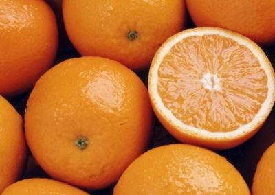 Citrus Cultivars 043