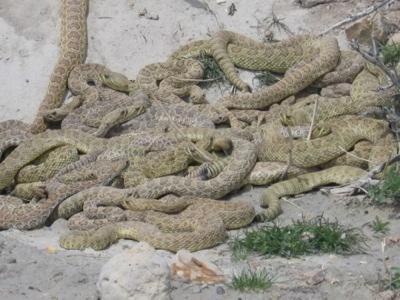 Snake-Pit-5-500X375