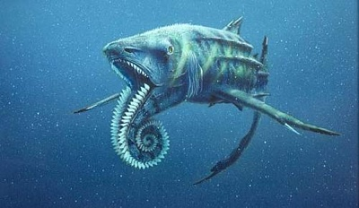 Helicoprion23D