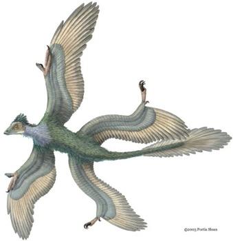 Microraptor 3