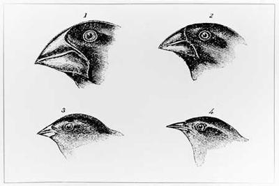 Darwinfinches