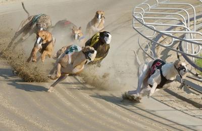 Large Greyhound-Racing