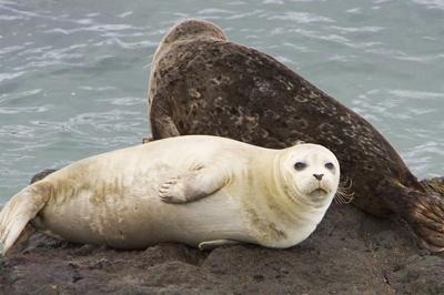 Seals2-M