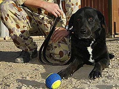 Bomb-Dog