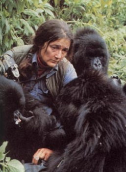 Gorilla Dian