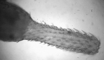 070208 Worm Parasite 02