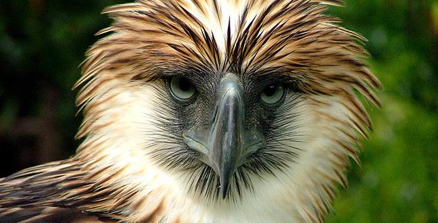 Top 10 Formidable Birds Of Prey