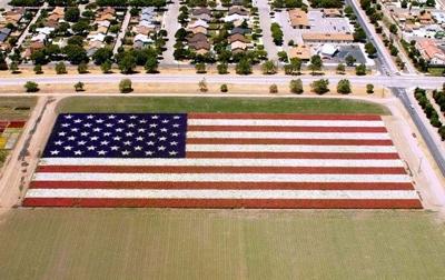 Flower Flag 2 2002