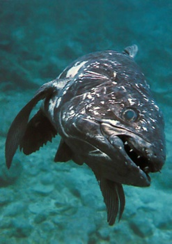 Sf Coelacanth 5