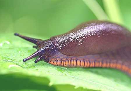 4.24.09 Slugs 2