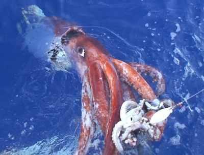 061222 Giant Squid 1
