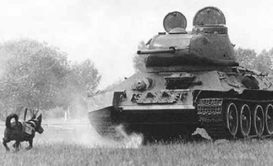 156950,Xcitefun-Weapon-3