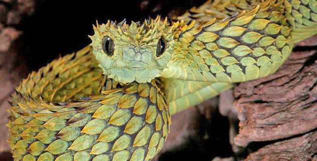 10 Unusual and Amazing Snakes - Listverse