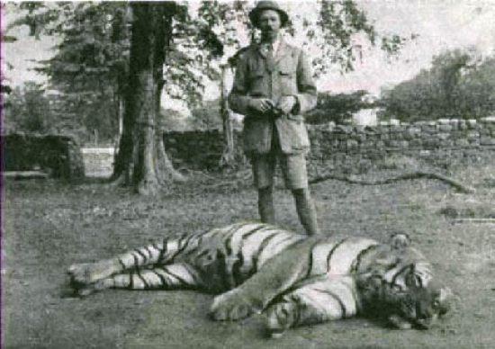 Jim-Corbett-Tiger