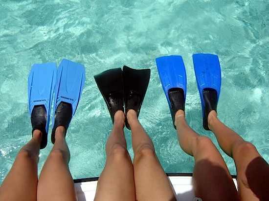 Flippers.jpg