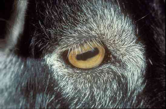 10 Animals With Incredible Eyes Listverse