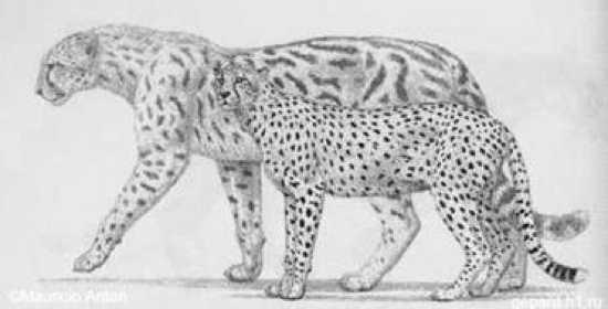 Pardinensis