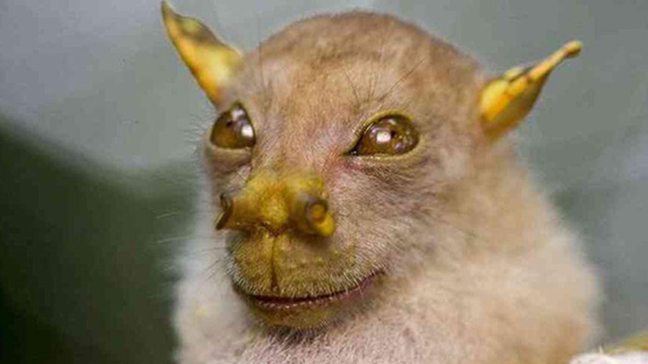 Animals With Weird Faces 3