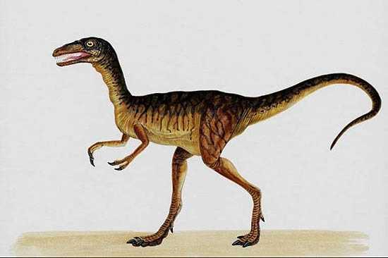 Compsognathus 02
