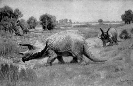 Triceratopsillustration