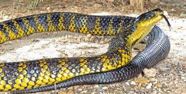 Top 10 Venomous Snakes