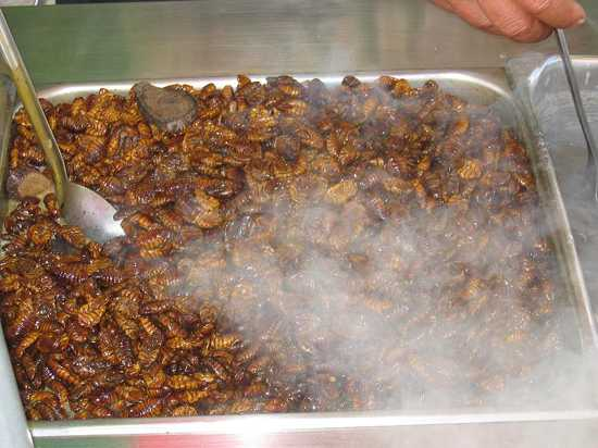 800Px-Silkworm Snack