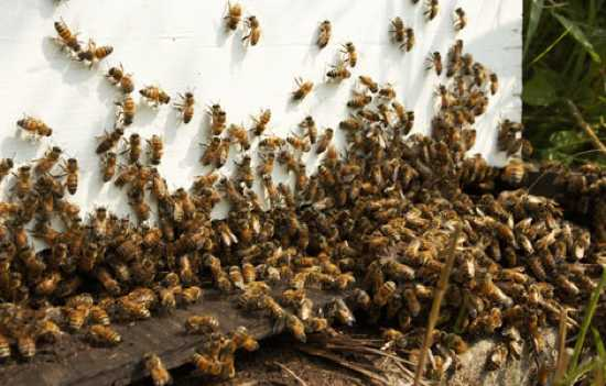 2598 Killer-Bees-4 04700300