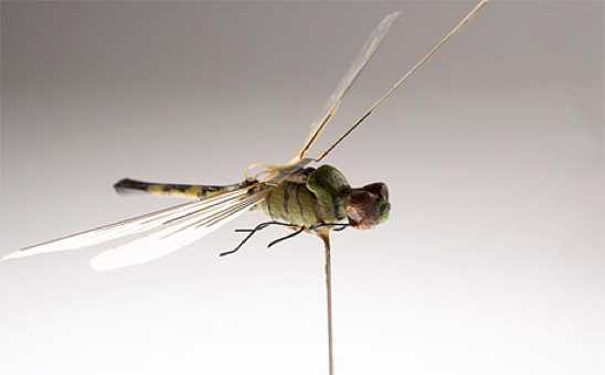 2000Insectothopter