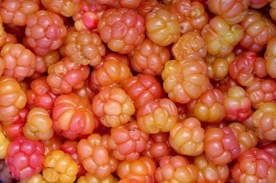 Cloudberry+-+Rubus+Chamaemorus+64000