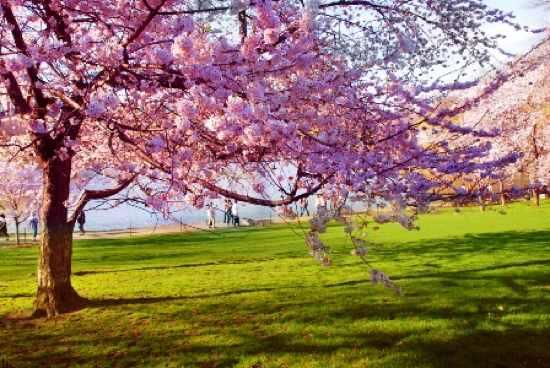 Spring-Lifestyle