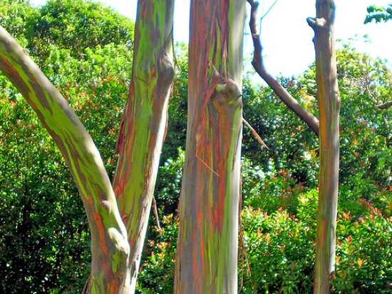 Top 10 unusual trees listverse for Unusual small trees