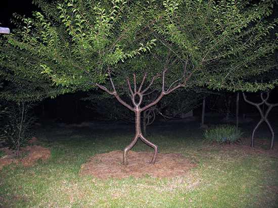 Top 10 Unusual Trees - Listverse
