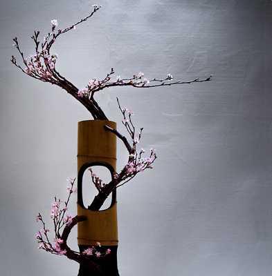 Sakura-Pict4507Jpg