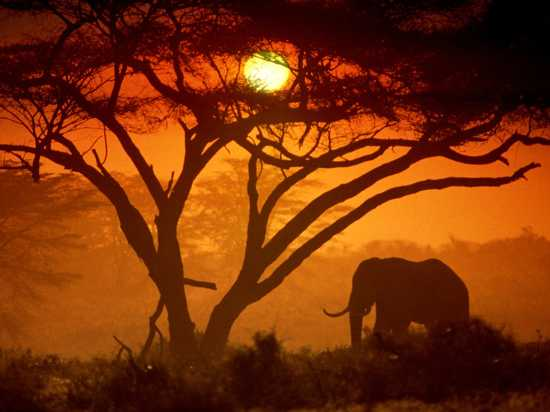 Amboseli-National-Park-Kenya-Picture