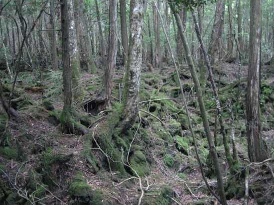 Aokigahara-Forest-104