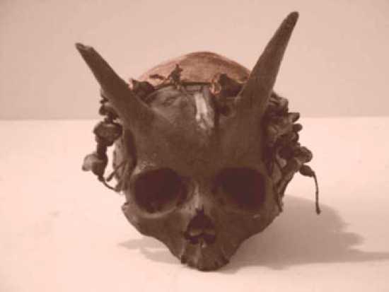 Image result for The Horned Human Skulls