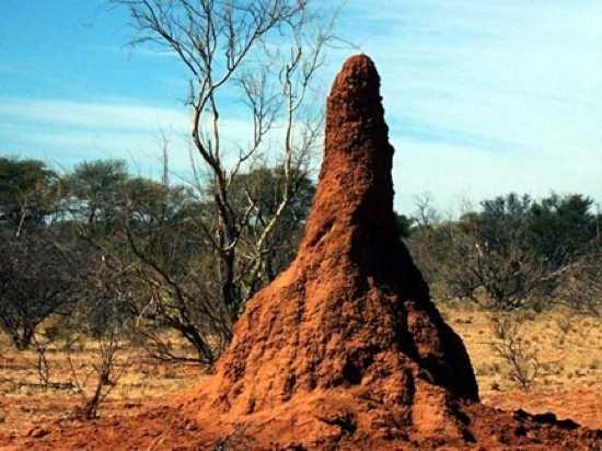 Mmw Termitemound 080609 Article