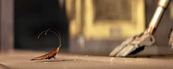 Wall-E-Cockroach