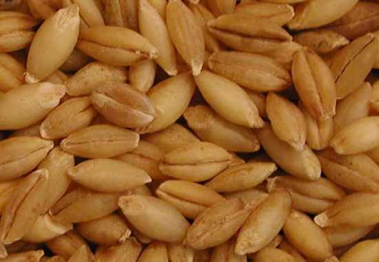 I-Barley